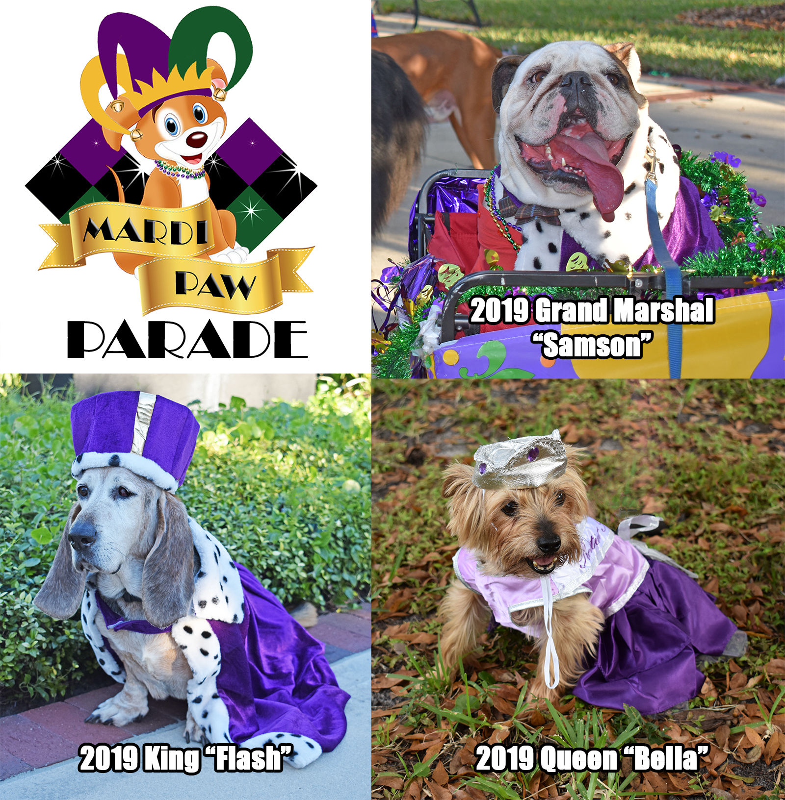 Dogs dressed up at Mardi Paw